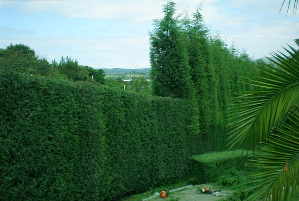 Empresas jardiner a asturias phoenix for Empresas de jardineria